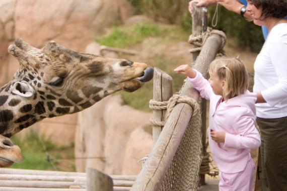 LE CORNELLE WILDLIFE PARK, THE OASIS FOR ANIMALS