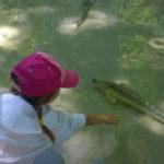 hotel per il parco ittico paradiso