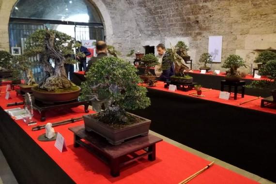 Mostra Evento Bonsai (Cesano Maderno, 26-27 Settembre 2020)